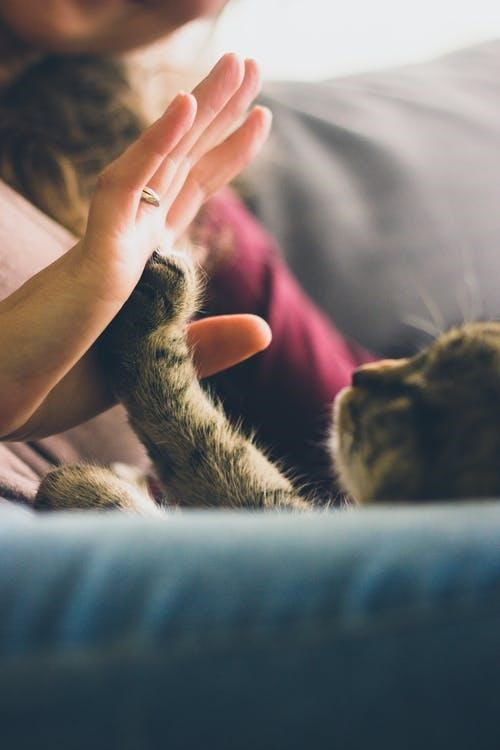 CBD Oil for pets like cats